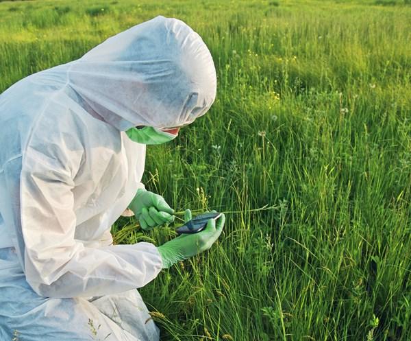 日本2017最新研發成果(8/30)-防稻螟蟲類派滅淨殺蟲劑感性檢測