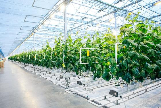 引水從事滴灌農業生產恐將產生大量溫室氣體