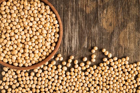 發酵豆粕作為魚飼料替代物的潛力