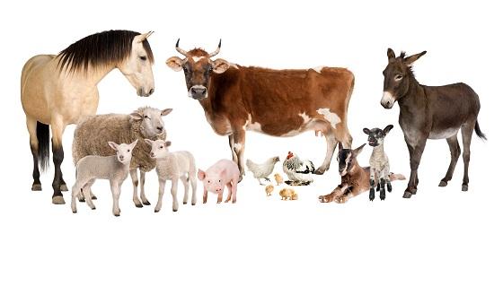 導入機器學習科技預防人畜共通傳染病
