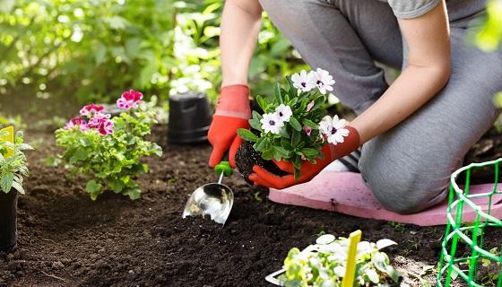 研究指出都市花園與菜園為保育物種的重要關鍵