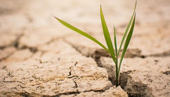 研究發現糞金龜能改變土壤菌相組成有助於強化糧食安全