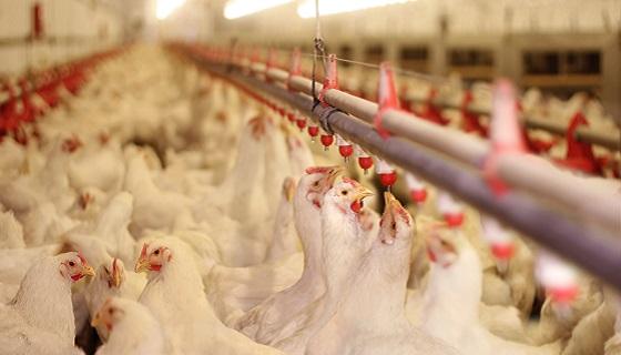 世界動物衛生組織最新的研究報告顯示全球已逐漸落實動物抗菌劑的用藥安全及監控管制