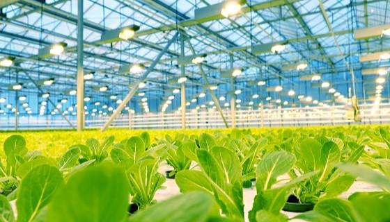 都市農業在美國紐約都會區推行之現況及挑戰