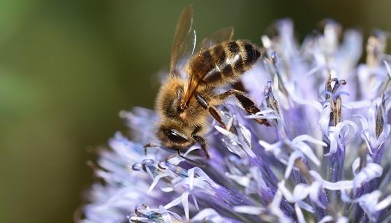 開發以攝錄設備自動分析系統解開蜜蜂八字舞行為背後隱含之蜜源資訊