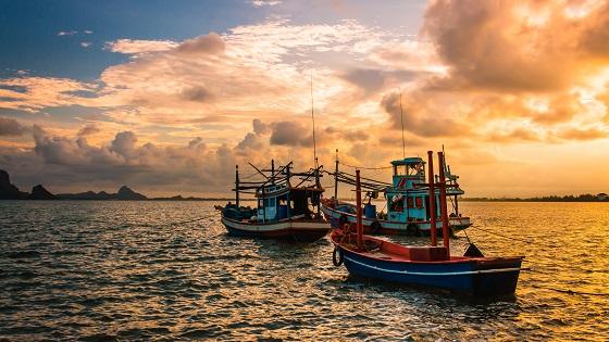以藻油取代魚油於蝦養殖業上的應用