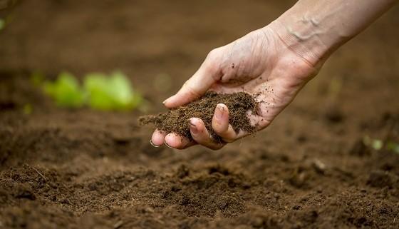 開發綠色廢棄物再利用成為生產人造土壤的永續原料