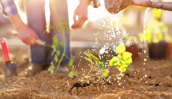 最新研究發現土壤孔隙結構與大小是影響土壤碳儲存的主要關鍵