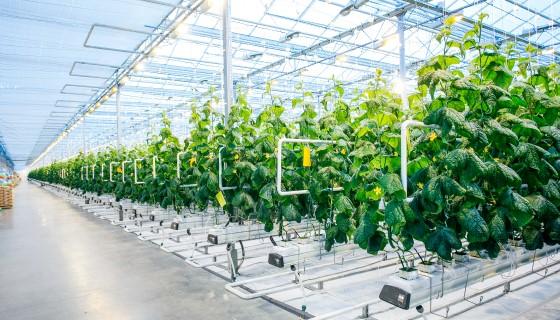 在都市地區發展垂直農業的優勢及未來市場潛能