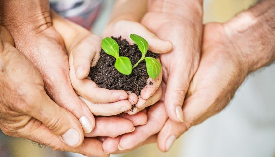 藉最新的植物分子生物研究成果可望解決肥料施用所衍伸的環境污染問題