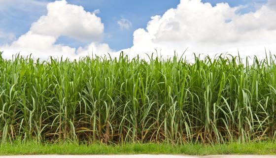 將甘蔗副產物做為第二代生質酒精以外的另一種利用