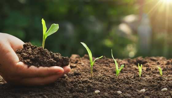 燻蒸劑對土壤健康方面的最新研究