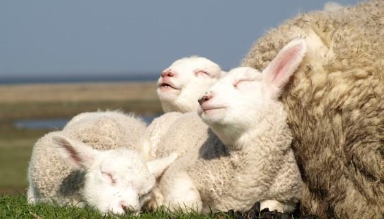 了解動物肢體語言將有助於提升動物動物福祉