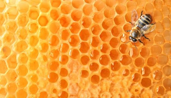 歐盟多年用藥禁令對野生蜜蜂族群的影響及相關成效