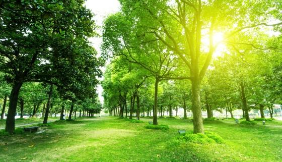 藉多重文獻研究多方印證都市綠化與健康長壽之間的關聯性