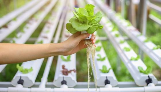 採用智慧化氣耕栽培的垂直農業技術