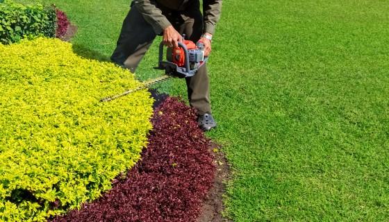 降低城市草坪除草頻率的益處