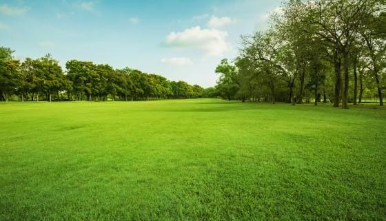 研究發現住在綠地周邊的女性較不易產生過重或肥胖等健康問題