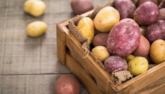 馬鈴薯病害的線上檢測工具應用
