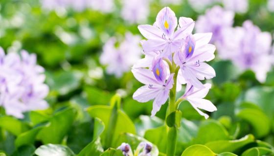 奈米碳材料有助於檢測除草劑污染