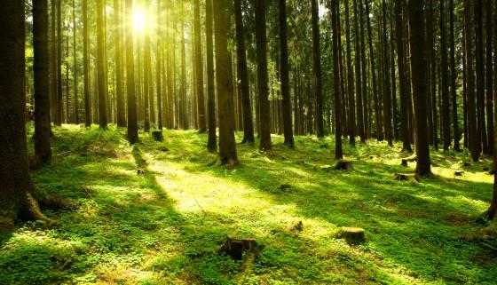 生物多樣性高的森林更能長期穩定固碳