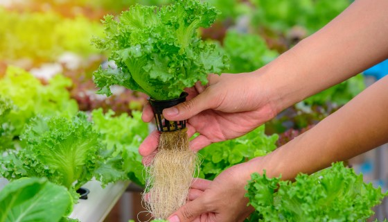 歐洲最大的植物工廠將在土耳其安塔利亞開始進行作物生產