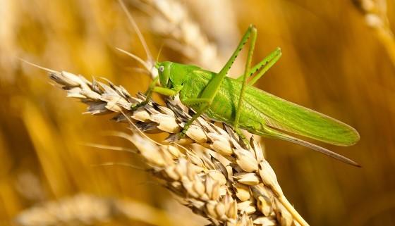 以虛擬飛行模擬器測試新型農藥對昆蟲的影響