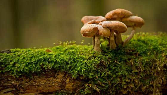 真菌如何幫助創建綠色建築業