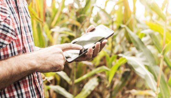 新的試驗方法可以更準確地測量玉米的氮需求量