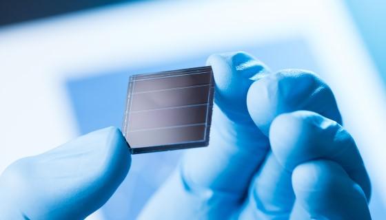 微流體晶片技術可快速診斷多種植物病毒所引起的疾病