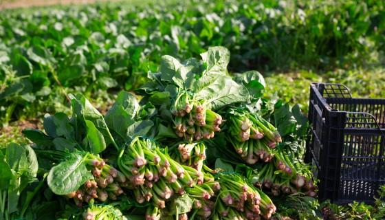 快速、準確且無損的分析食品品質新方法