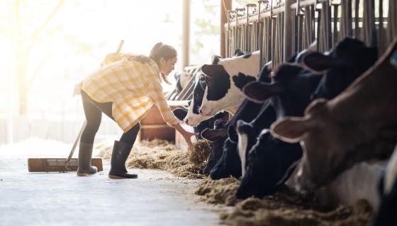 使用數學預測畜牧生產對環境的影響