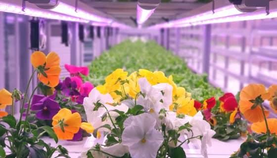 高科技農民於杜拜沙漠播下綠色革命種子