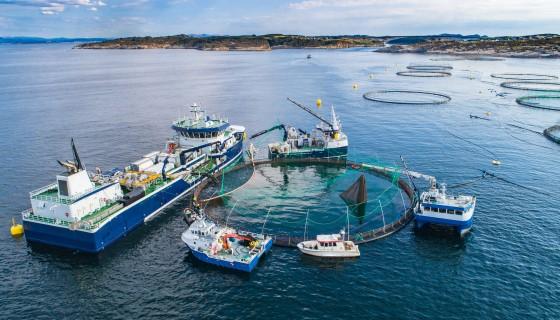 愛爾蘭鮭魚養殖場已成功開發出對抗海蝨和阿米巴原蟲感染症的新工具