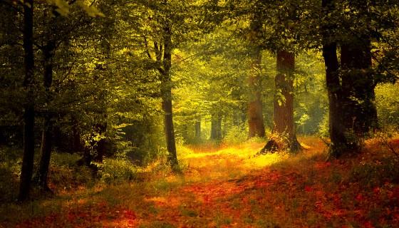 以無人機建構感測器網路,監測森林之環境與生態變化