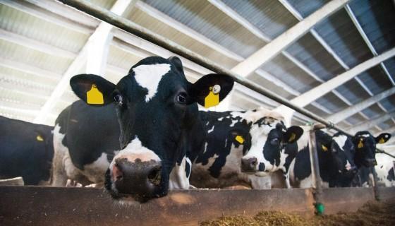 新型機器人Barn-E是清潔牛舍糞便的好幫手