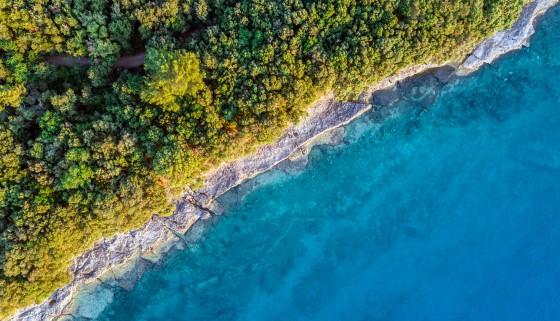 生態工程瓦片促進沿海地區生物多樣性