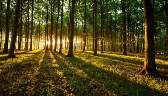 虛擬實境創造森林隨著氣候變化的直覺體驗