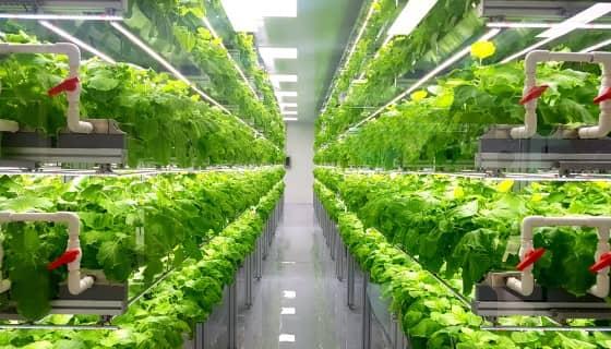 奈米材料「量子點」 藉由轉換光波長來提高農作物產量