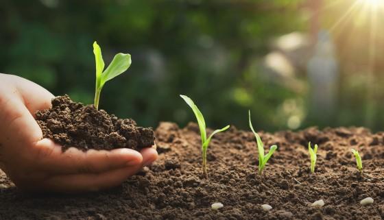 植物如何改變根系模式以競爭地下資源