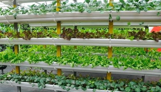 以色列最大連鎖超市將開設店內垂直農場