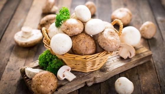 蘑菇副產物的新生命—化身食品、化妝品、生物塑膠與肥料的新材料