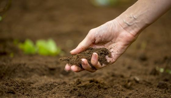 一種永續的耕作方式- 永續土壤管理,拯救地中海土地