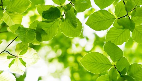 新方法偵測植物避蔭效應