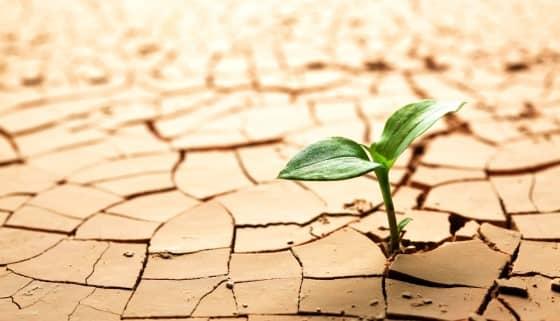 FABLE聯盟開發「整合永續土地利用和糧食系統」之路徑
