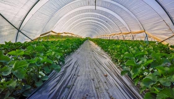 加拿大政府增加研究基金推動減少農用塑膠