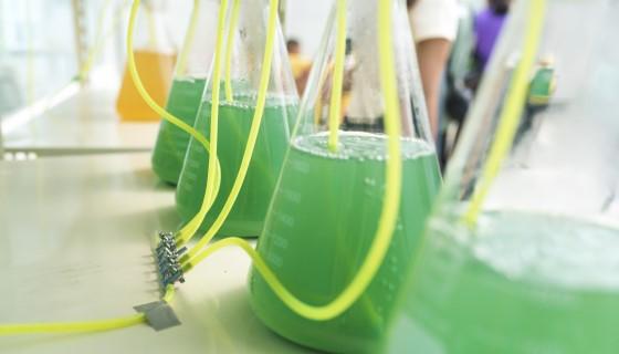 將厭氧消化系統結合微藻自營-混合營養培養,將營養之廢棄物轉化為動物生質飼料來源