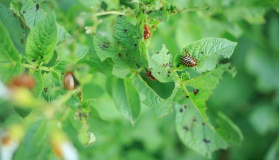 應用快速蒸氣離子質譜儀來鑑定及處理破壞性害蟲