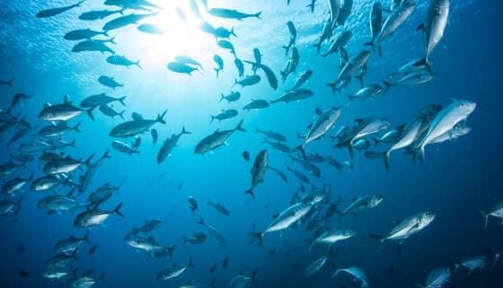 日本Yanmar Marine Systems公司推出自動魚類計數系統