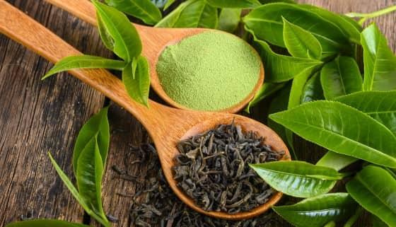 日本靜岡大學成功解析茶葉DNA、機能性成分預測、縮短新品種開發時間